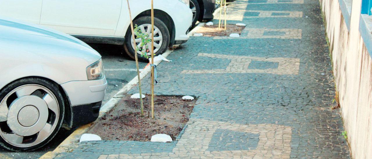 54193cbc5 Meio Ambiente planta mudas de árvores em calçada ecológicaJornal ...